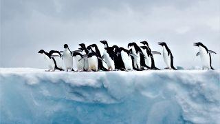一群企鹅在南极冰上聚集。