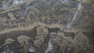 澳大利亚35亿年前的梳妆台形成的叠层石的显微照片(图像中为金色条纹)。