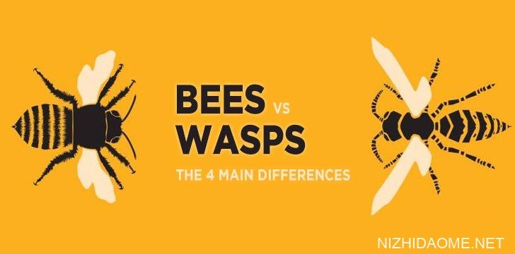 蜜蜂与黄蜂:4个主要区别