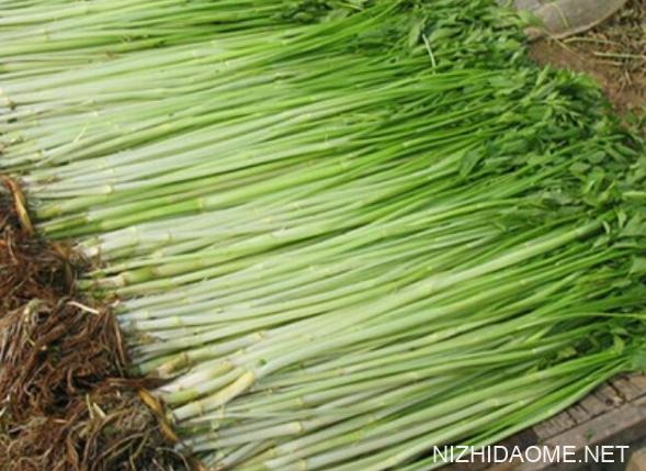 水芹菜可以每天吃吗 水芹菜吃多了对身体有害吗