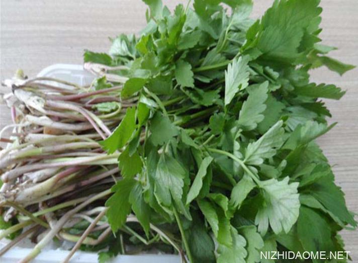 小叶芹的功效与作用 小叶芹的营养价值