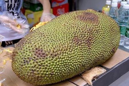 菠萝蜜籽怎么煮需要煮多久才能吃