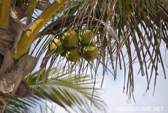 青椰子怎么打开 青椰子怎么挑选