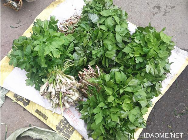 水芹菜是什么样的 水芹菜有什么营养价值