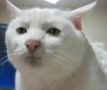 流泪猫猫头是真的吗?我哭了 我装的
