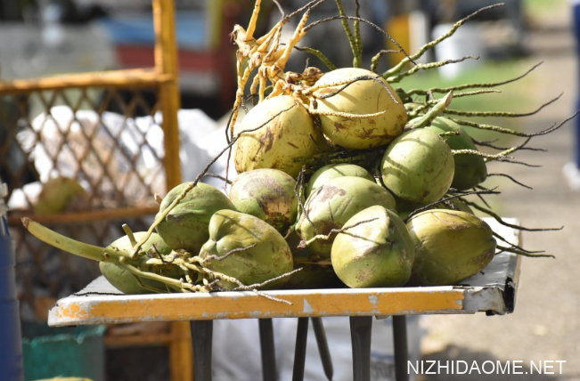 青椰子肉怎么吃才好吃 青椰子的功效与作用