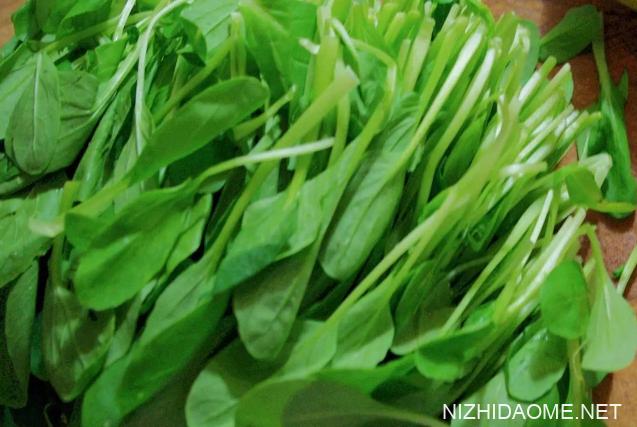 鸡毛菜和小青菜有什么区别 鸡毛菜和青菜的区别
