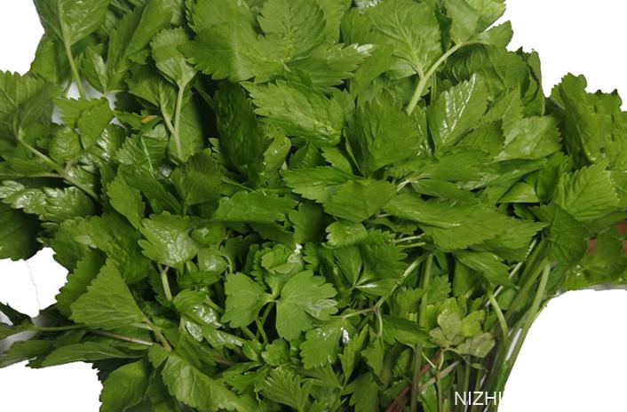 小叶芹怎么做好吃 小叶芹野菜有毒吗