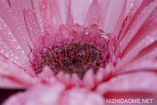 我国花粉过敏人群或超2亿:易感人群要加强防护 戴口罩等