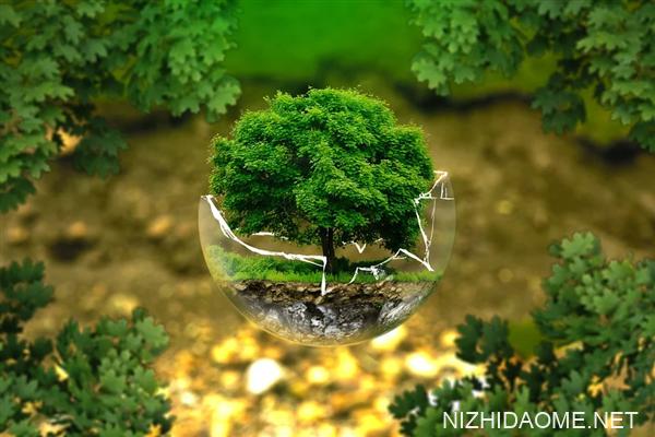 沙漠都能变绿洲!我国成全球森林资源增长最多国家:面积达33亿亩