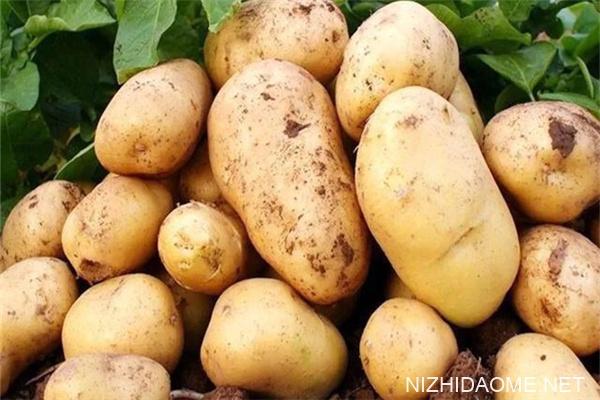 土豆发芽了还能吃吗 土豆怎么保存不发绿不发芽