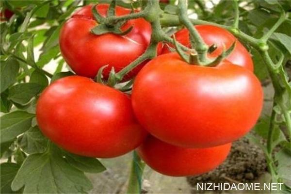 西红柿可以空腹吃吗 西红柿对胃病有好处吗