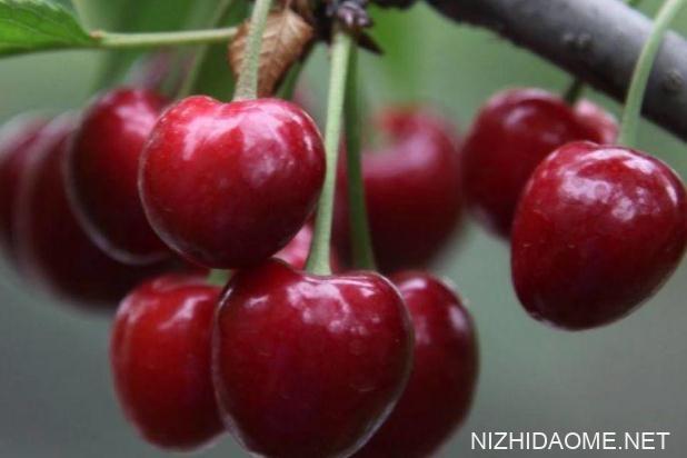 樱桃的保存方法 樱桃可以放在冰箱里面冷藏吗