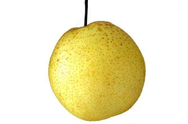 梨子的营养价值及功效 吃梨子的好处