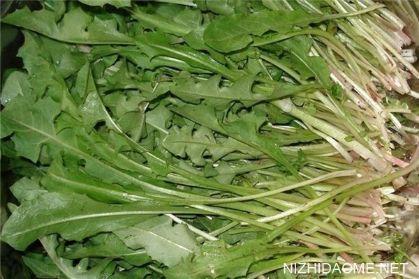 什么野菜抗癌最有效 野菜都有哪些品种可以吃