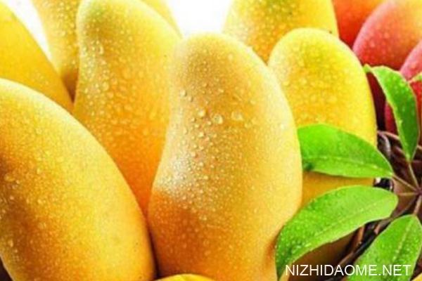 芒果是什么季节的水果 吃芒果的季节