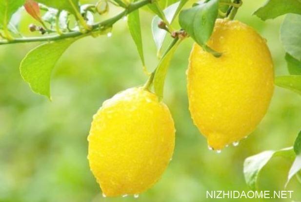 柠檬的各种吃法 吃柠檬的好处