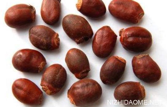 荔枝核可以吃吗 荔枝核的功效与作用