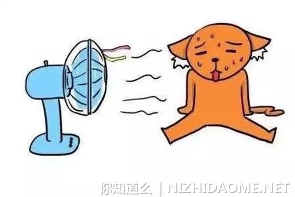 防暑降温饮料有哪些 防暑喝什么好